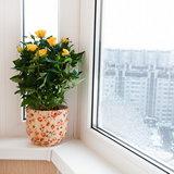 Цветок рядом с застекленным балконом на подоконнике