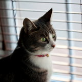 Кошка у жалюзи
