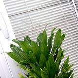 Домашнее растение у окна с горизонтальными жалюзи